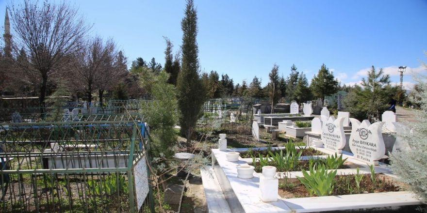 Mezar sahiplerine fidan dağıtıldı