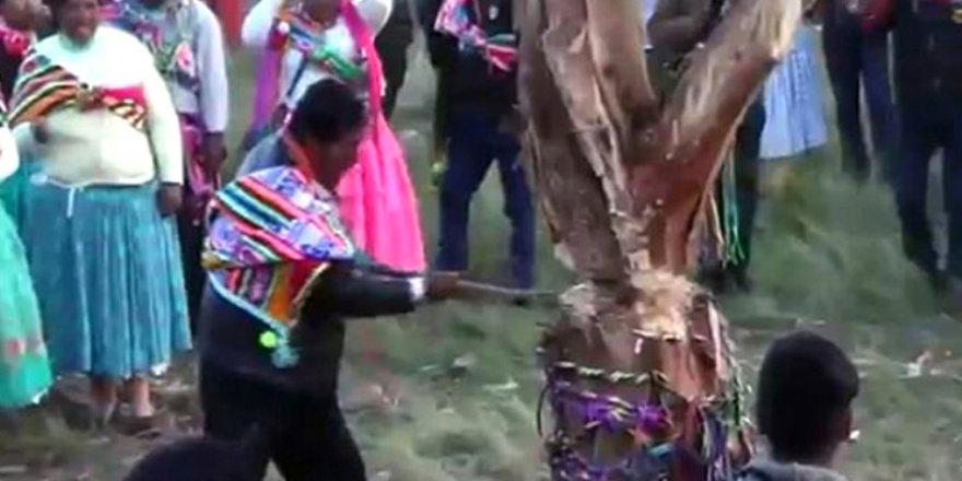 Festivalde korkunç kaza: Kestiği ağaç üzerine devrildi !