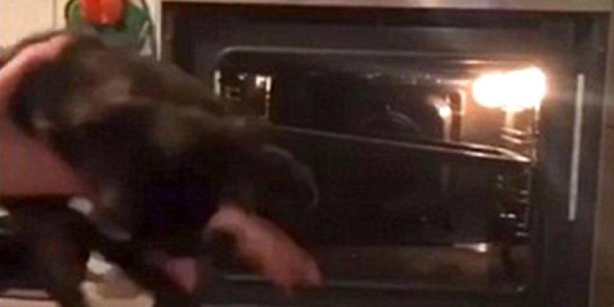 Vahşet ! Kediyi diri diri fırına attı