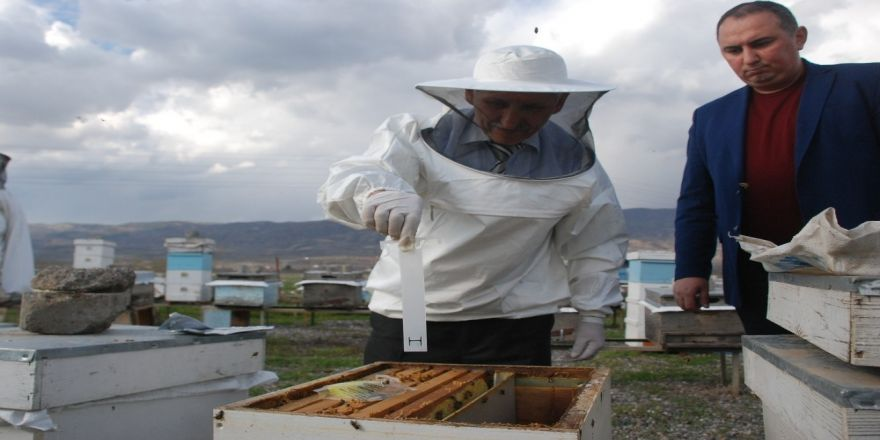 Arı kenesi ile mücadelede 40 bin kovan ilaçlanacak