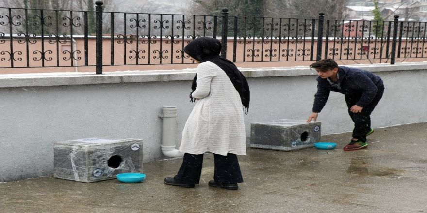 """Hayvan gönüllüsü gençler """"iyilikte"""" yarıştı"""
