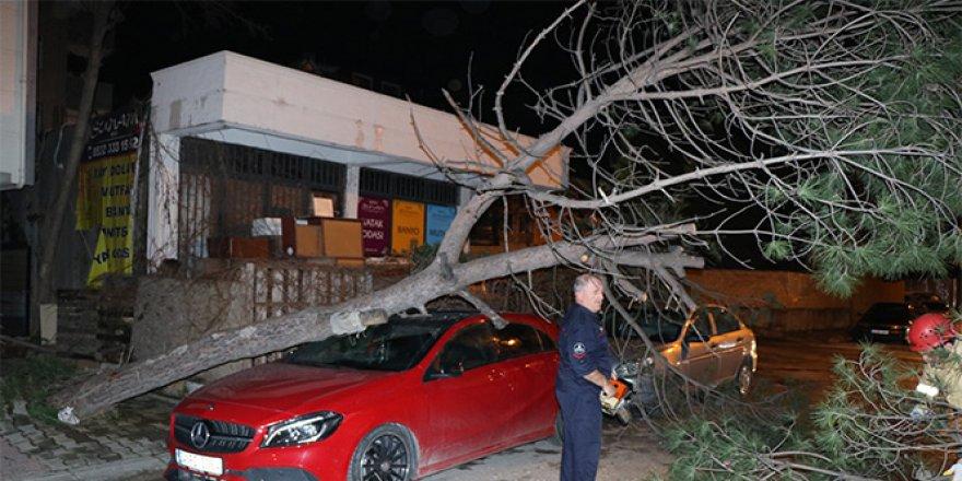 Kökü çürüyen ağaç, lüks otomobilin üstüne devrildi