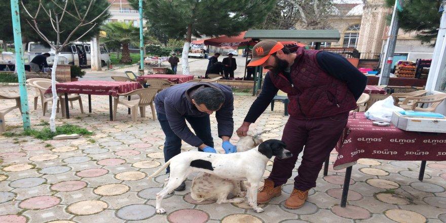 Köpeklere kuduz aşısı