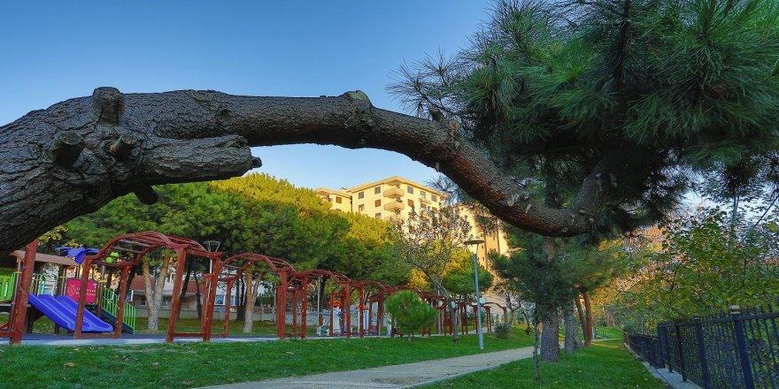 Bir ayda bin 100 ağaç dikildi