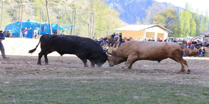 Boğalar sezonun ilk yarışı için arenaya çıktı