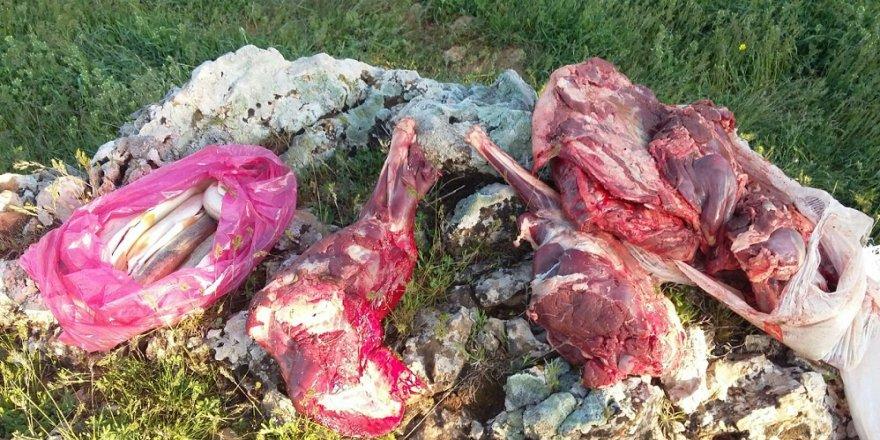 Yaban keçisi avlayanlar yakalandı
