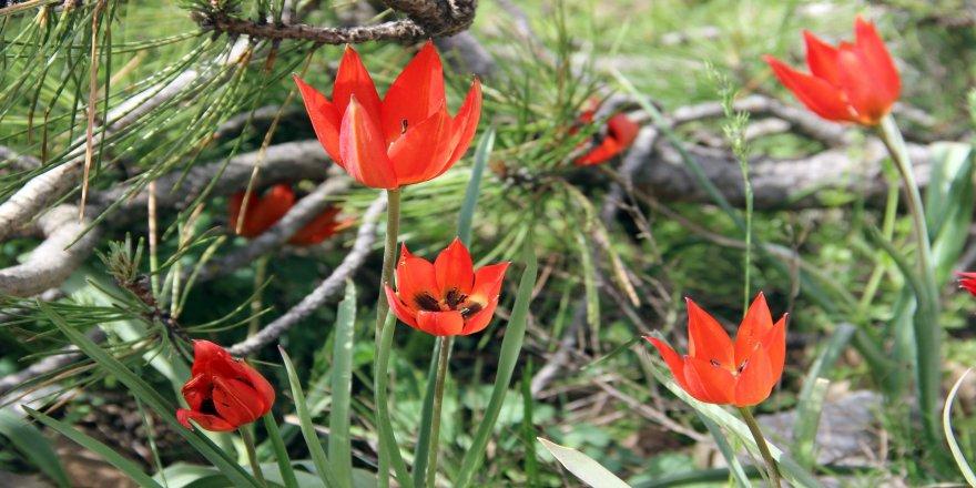Bu çiçeği koparan yandı: Cezası 48 bin TL