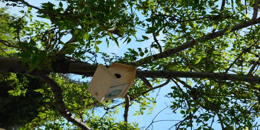 Okul bahçelerine kuş evleri konuldu