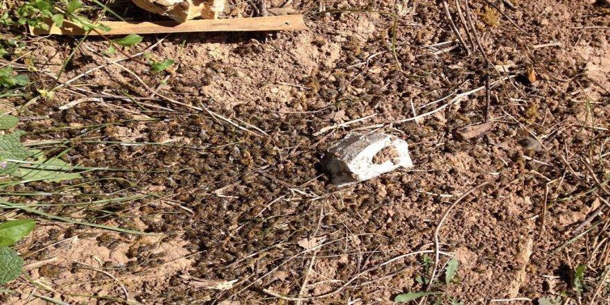 Bilinçsiz ilaçlama arıları telef ediyor