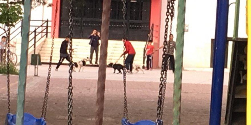 Okul bahçesinde köpek dövüşü