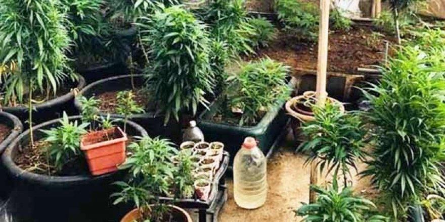 Evin bahçesine uyuşturucu serası kurmuş