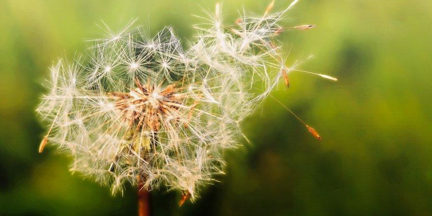 Bahar alerjilerini griple karıştırmayın