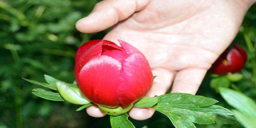 Bu çiçeği koparmanın cezası 48 bin 600 lira!