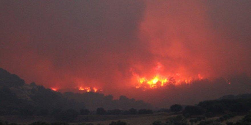 Orman yangınında 100 hektarlık alan zarar gördü