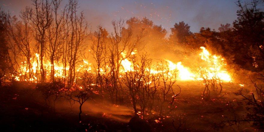 Orman yangını: 20 hektar alan yandı