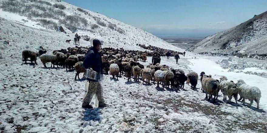 Kar hayvanları telef etti