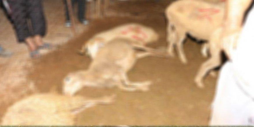 Yıldırım düşmesi sonucu 23 küçükbaş hayvan telef oldu