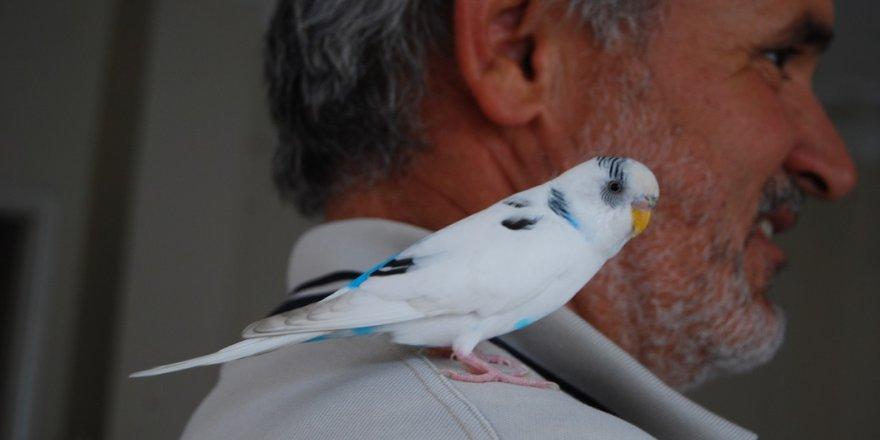 9 gündür aradığı kuşuna kavuştu
