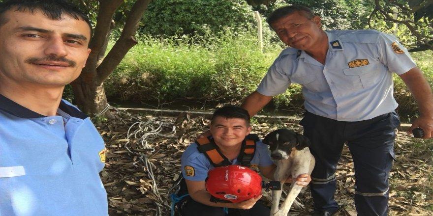 3 gün kuyuda yaşam mücadelesi veren köpek kurtarıldı
