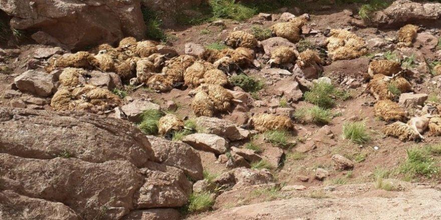 Toplu koyun intiharı