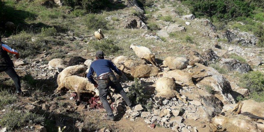Koyunlar uçurumdan atladı