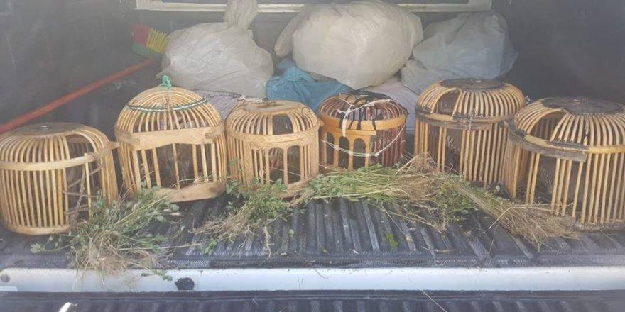 Keklik avcılarına ceza