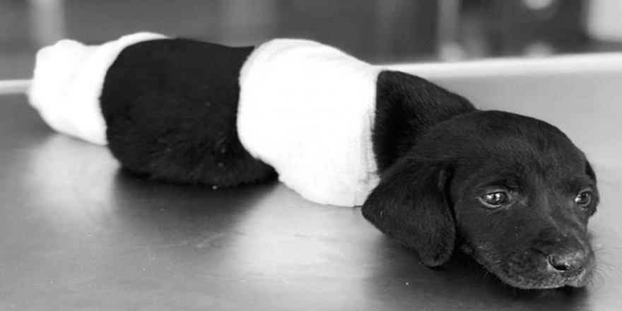 Yavru köpeğe işkencede yeni gelişme