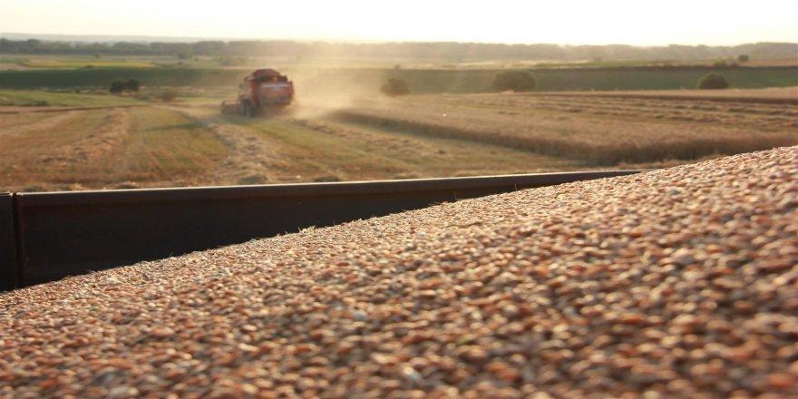 Çiftçilerin 'buğday' hasadı mesaisi sürüyor