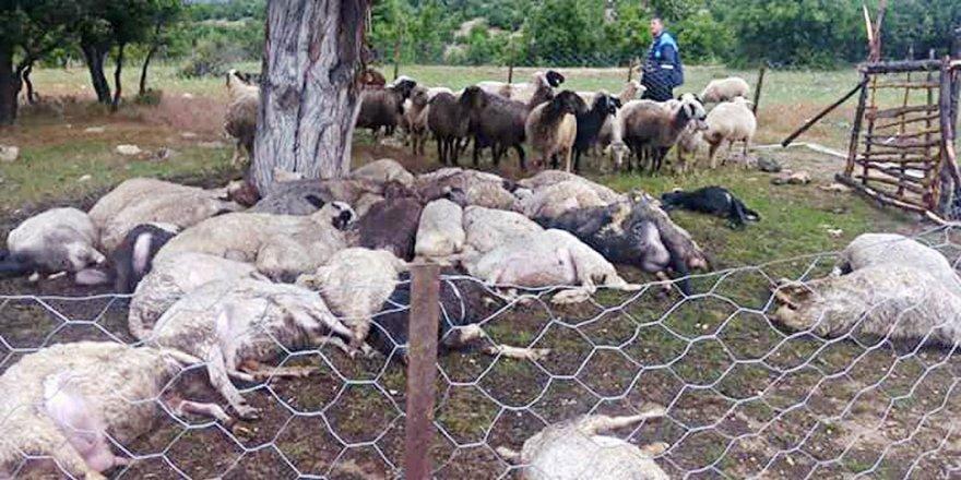 32 koyun telef oldu
