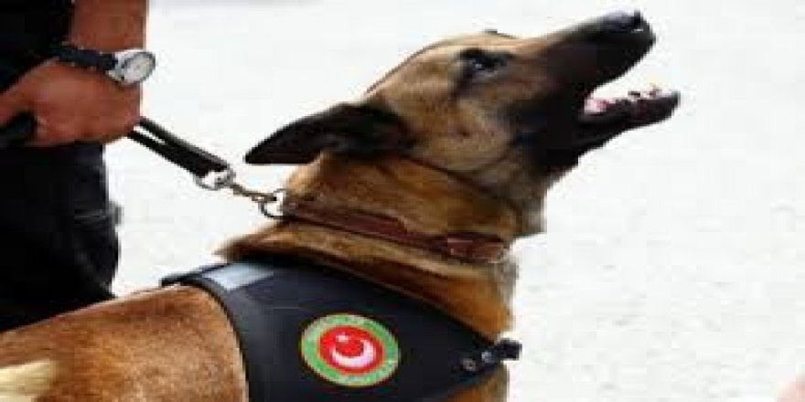 Dedektör köpeğin tepki verdiği tekerden 400 bin TL'lik uyuşturucu çıktı