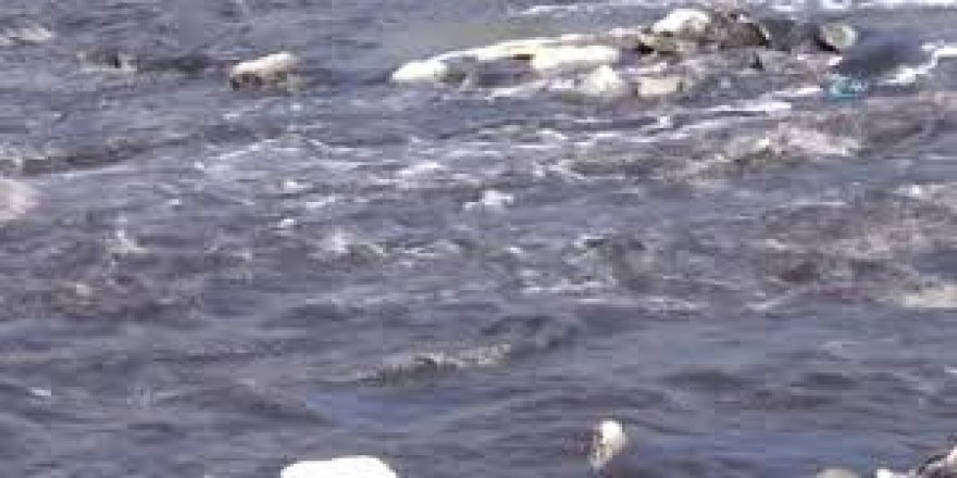 Ergene Nehri siyah akıyor