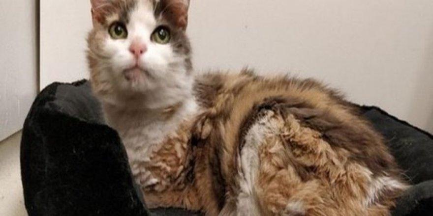 17 yıl önce kaybolan kedi sahibine geri döndü