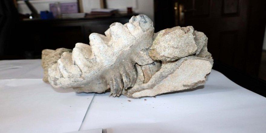 8 milyon yıllık fosil bulundu