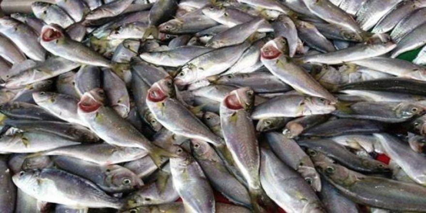 """Balıkçıları üzecek """"Erken Tahmin"""""""