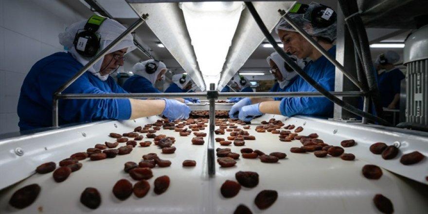 50 ülkeye 85 milyon dolarlık organik ürün ihracı
