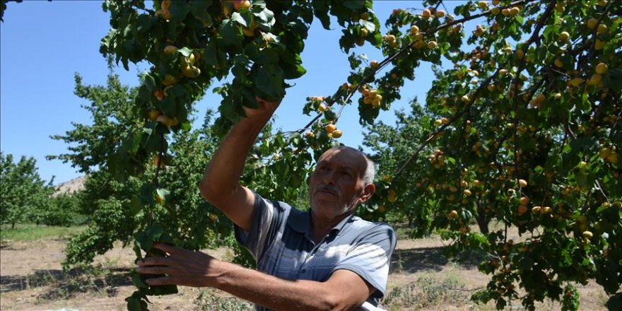 Anlaşmalı organik tarımla üreticinin yüzü güldü