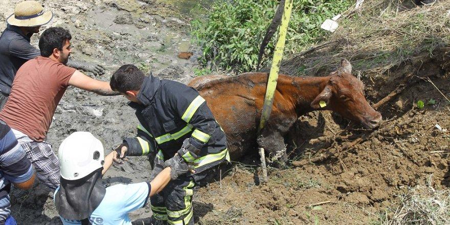 Dereye batan inek kurtarıldı