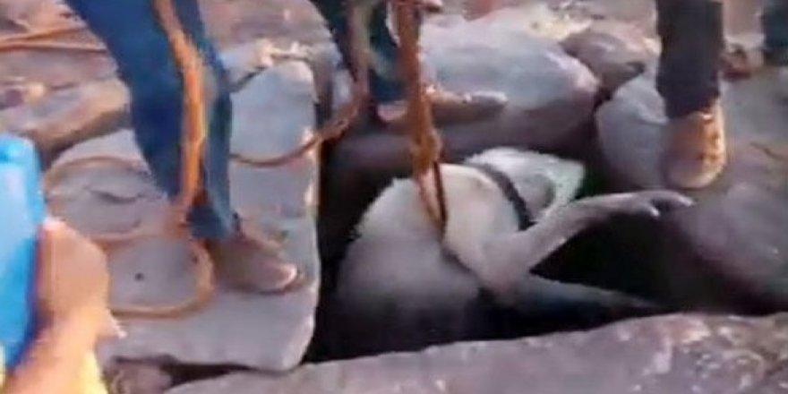 Su kuyusuna düşen köpeği vatandaşlar kurtardı