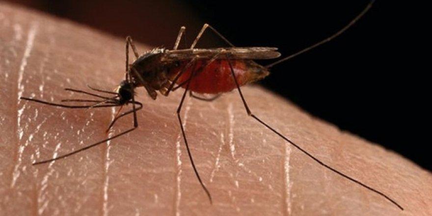 Yeni sıtma ilacına yeşil ışık yakıldı
