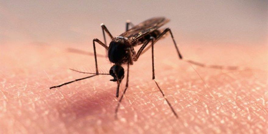 Sivrisinek ısırığı öldürdü