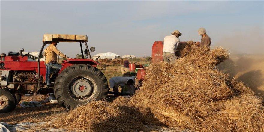 İsrail Filistinli çiftçilere zarar ettiriyor