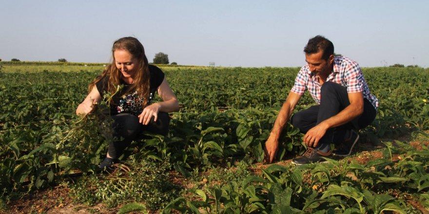 Karı koca birlikte şifa ekiyor