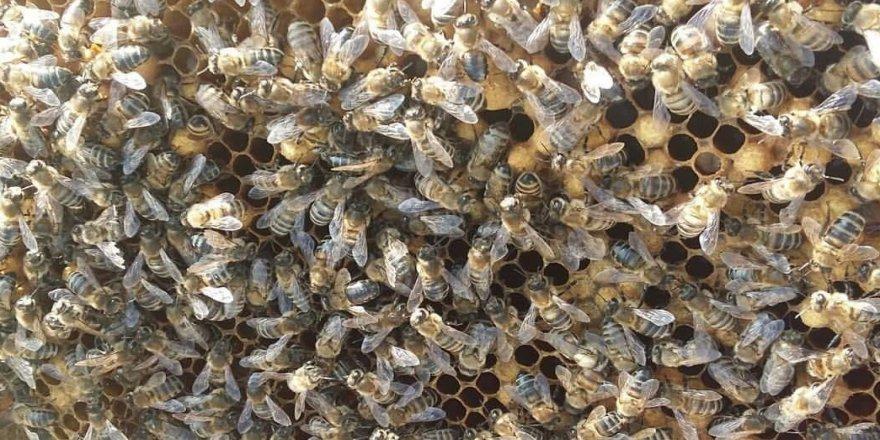 Arıların sıcak hava ile mücadelesi