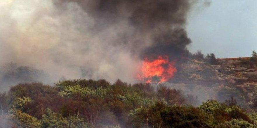İsveç'te ada yangını