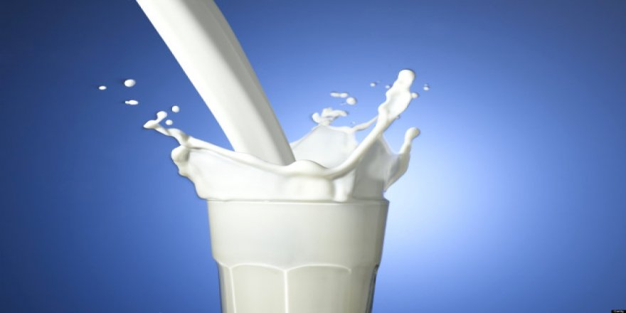 Toplanan inek sütü miktarı yükseldi
