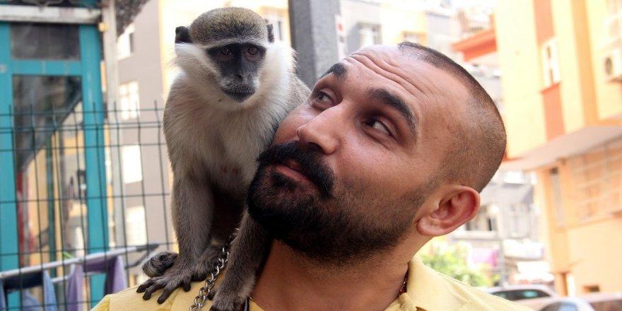 Maymununa 1,5 ay sonra kavuştu