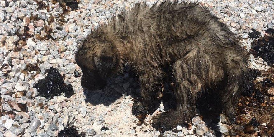 Yavru köpekler ölmek üzereyken kurtarıldı