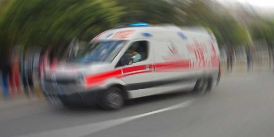 Yılanın soktuğu kadın hastaneye kaldırıldı