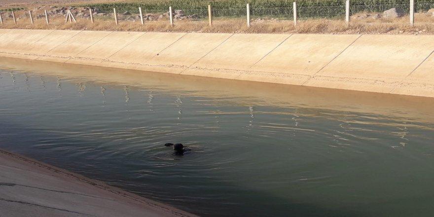 Sulama kanalına düşen Suriyeli çocuk boğuldu