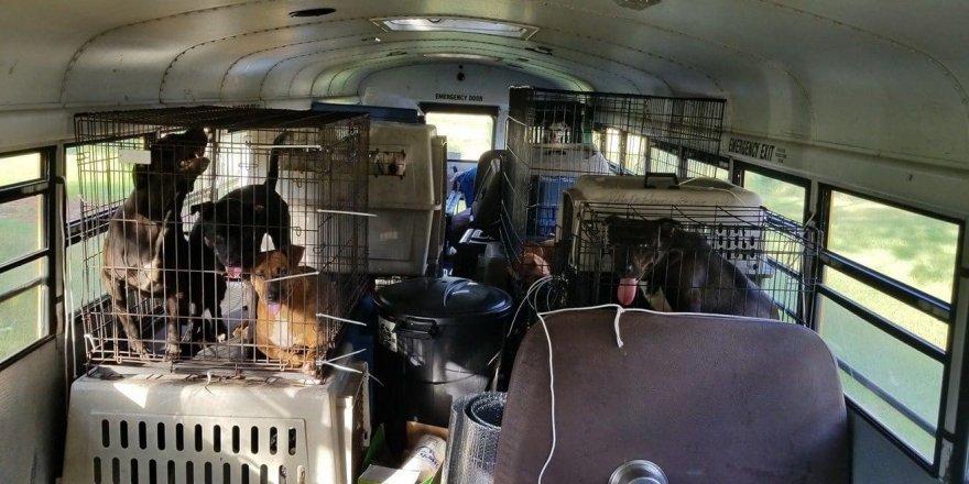 Kasırgadan 64 kedi ve köpeği kurtardı